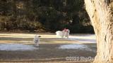 Jolene 1 Litter  200109 001.jpg