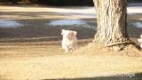 Jolene 1 Litter  200109 005.jpg