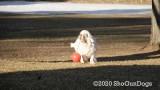 Jolene 1 Litter  200109 006.jpg