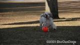Jolene 1 Litter  200109 007.jpg
