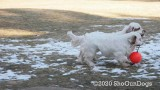 Jolene 1 Litter  200109 014.jpg