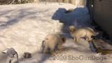 Jolene 1 Litter  200210 030.jpg