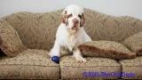 Jolene 1 Litter  200215 021.jpg