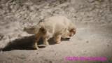 Jolene 1 Litter  200219 019.jpg