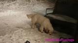 Jolene 1 Litter  200219 022.jpg