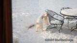 Jolene 1 Litter  200219 014.jpg