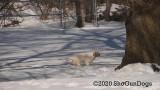Jolene 1 Litter  200221 002.jpg