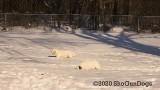 Jolene 1 Litter  200222 002.jpg