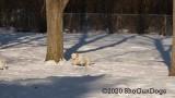 Jolene 1 Litter  200222 006.jpg