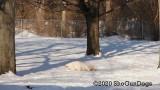 Jolene 1 Litter  200222 007.jpg