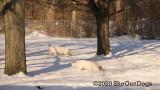 Jolene 1 Litter  200222 008.jpg