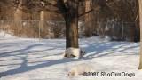 Jolene 1 Litter  200222 009.jpg