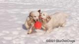 Jolene 1 Litter  200301 010.jpg