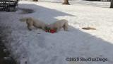 Jolene 1 Litter  200301 015.jpg