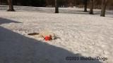 Jolene 1 Litter  200301 018.jpg