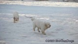 Jolene 1 Litter  200305 009.jpg