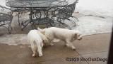 Jolene 1 Litter  200305 012.jpg