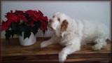 RIP Little Helen   8/31/2007 - 8/9/2021