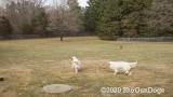 Jolene 1 Litter  200312 002.jpg
