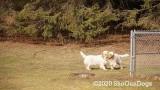 Jolene 1 Litter  200312 012.jpg