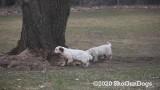 Jolene 1 Litter  200325 012.jpg