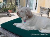 Olive's Gallery Page(s) 3 Updated on 3/31/2020