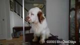 Dreamer  200408 009.jpg