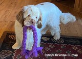 Remi's Gallery Page(s) 9 Updated 4/20/2020