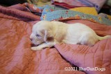 Jolene 2 Litter Weeks 2-3 Pages 14-15 Updated 3/12/21