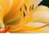 Bloemen en plantjes - Flowers