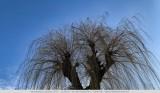 Het juiste takje gevonden -  Found the right twig