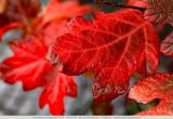 Herfskleuren - Autumn colours - Herbstfarben - Couleurs d'automne