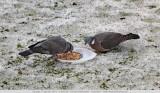 Slokoppen - Greedy eaters