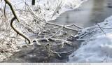 Frozen still life - Bevrozen stilleven