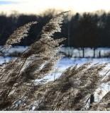 Winter in het Vennengebied