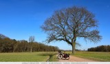 Bleu sky, lonesome tree, my bycicle and the moon