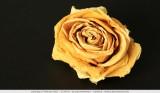 Dried rose in close-up
