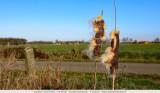 Reed stem and diepblue sky
