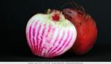 Candy Stripe Beet - Rood gestreepte biet