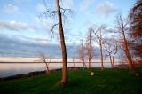 Les arbres admirant le fleuve