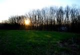 la forêt qui filtre le soleil