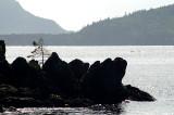 Les rochers noirs