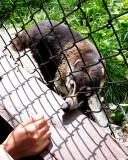 Miller zoo, le sanctuaire