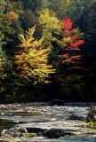 les arbres bi-colors