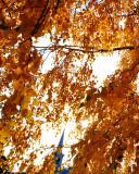 Le clocher à travers l'automne