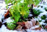 Les feuilles qui ne voulaient pas d'hiver