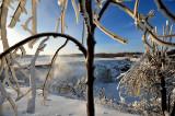 Vue à travers un arbre glacé