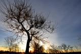 L'arbre magnifique