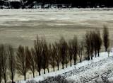 la rangée d'arbres de la marina