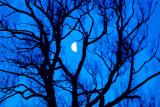 La Demi-lune